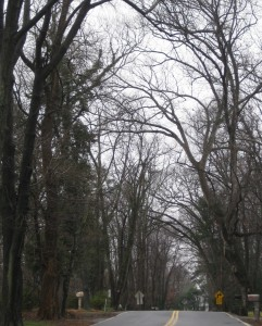 Dismal Day 029