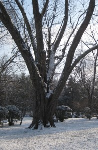 Snow! 014