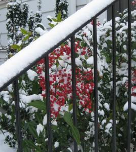 Snow! 021