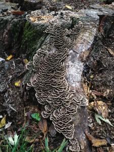 lichen017