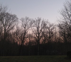 January 8 009