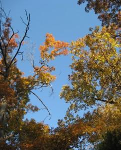 November trees 025