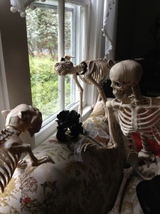 Skeletons 001