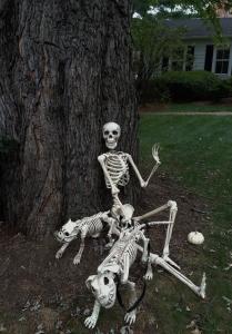 Skeletons 010