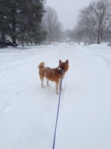 Big Snow 034