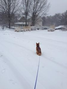 Big Snow 043