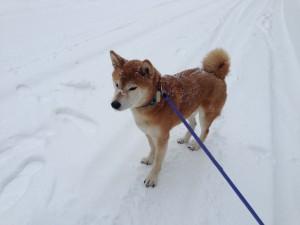 Big Snow 056